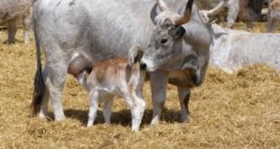 dan govedara