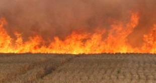 пољски-пожар-620x313